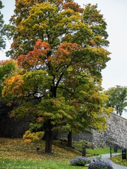 Beautiful colors. Akershus Festning / Akershus Fortress.